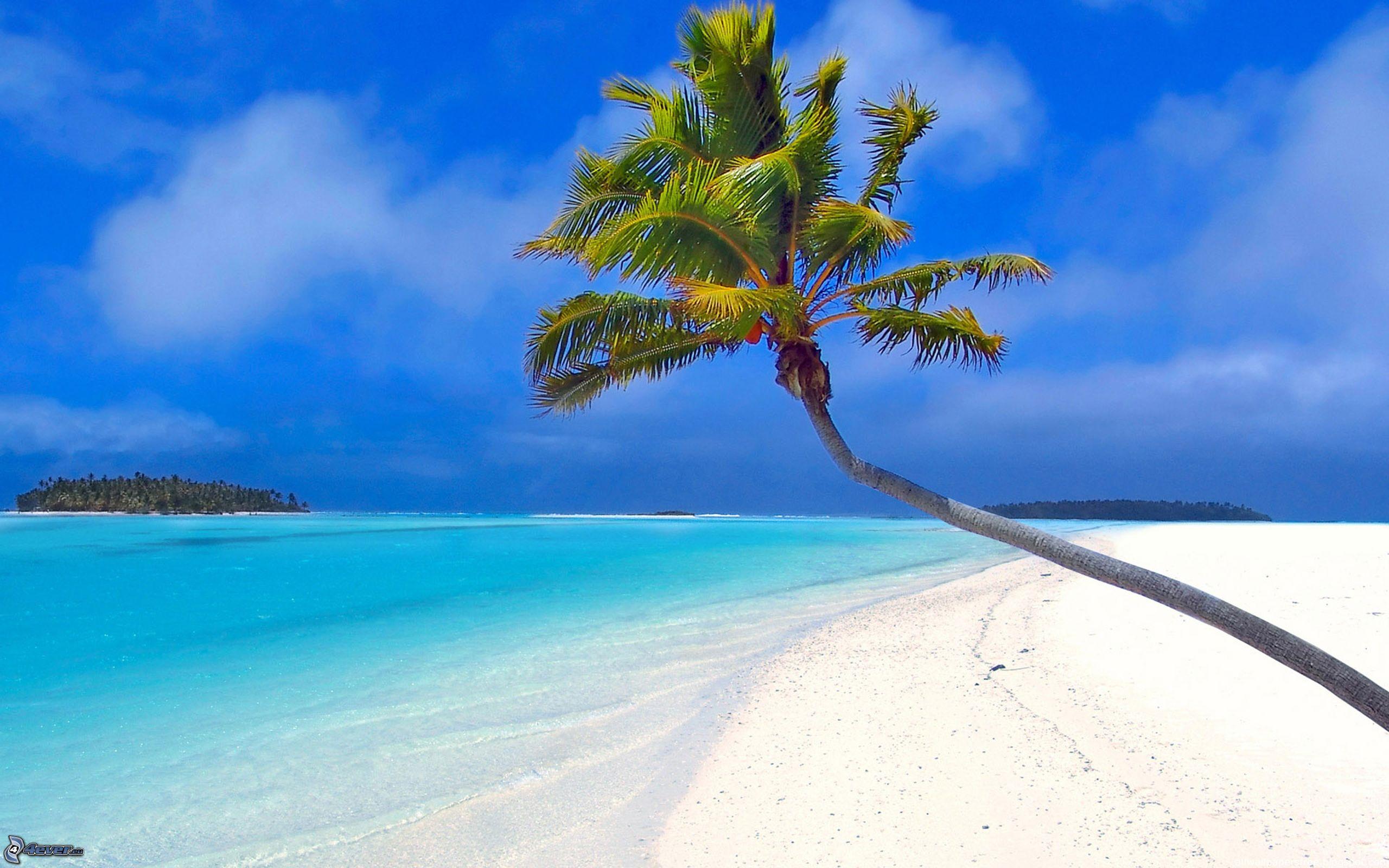 palme u00fcber dem sandstrand