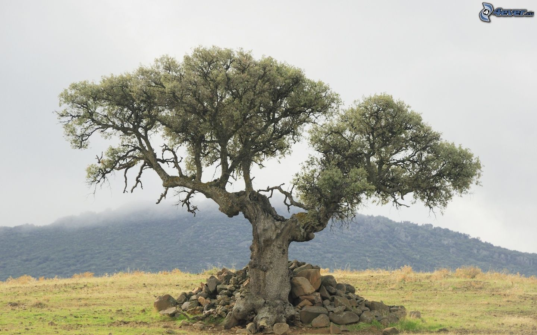 Baum for Raum pflanzen