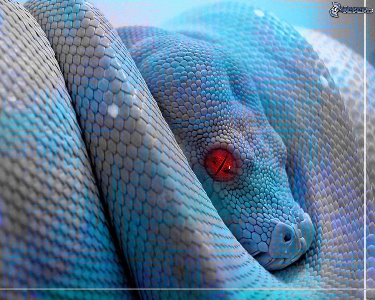 Blaue Schlange