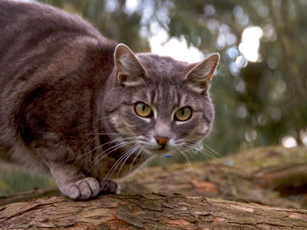 Braune Katze