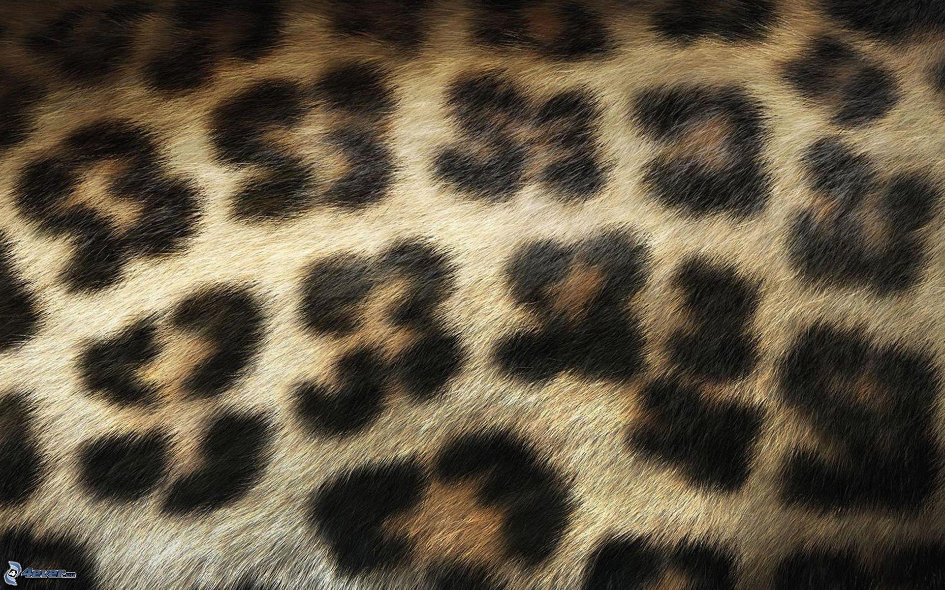 leoparden muster. Black Bedroom Furniture Sets. Home Design Ideas
