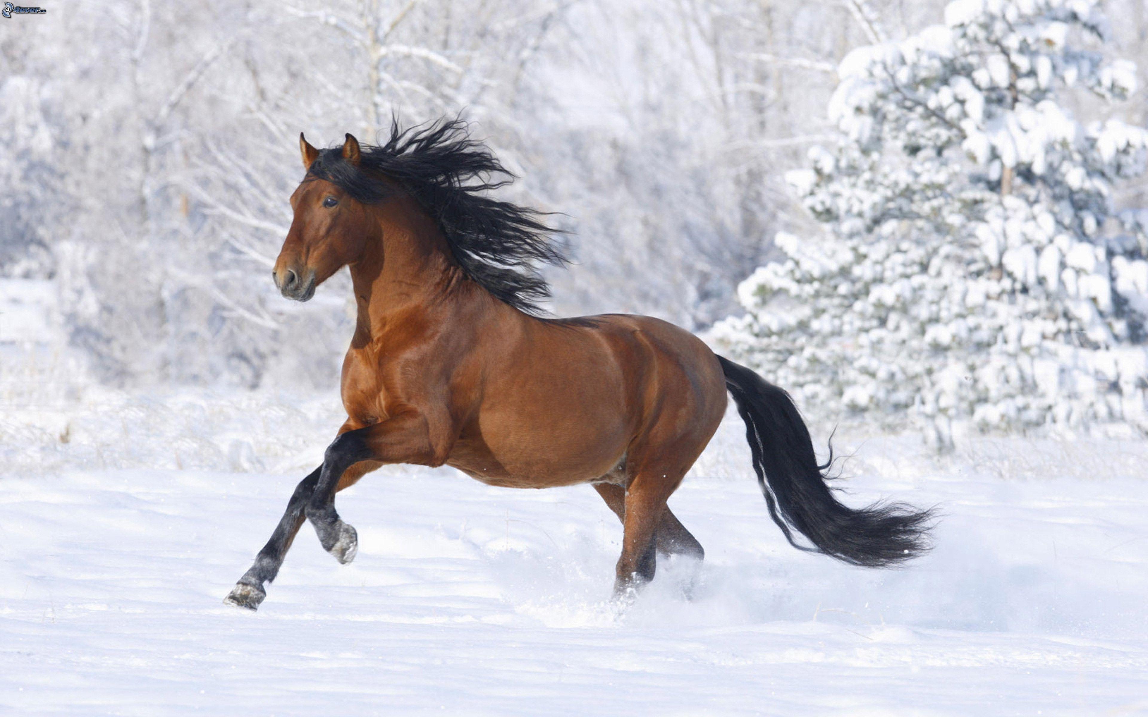 dieses pferd ist gefährlich