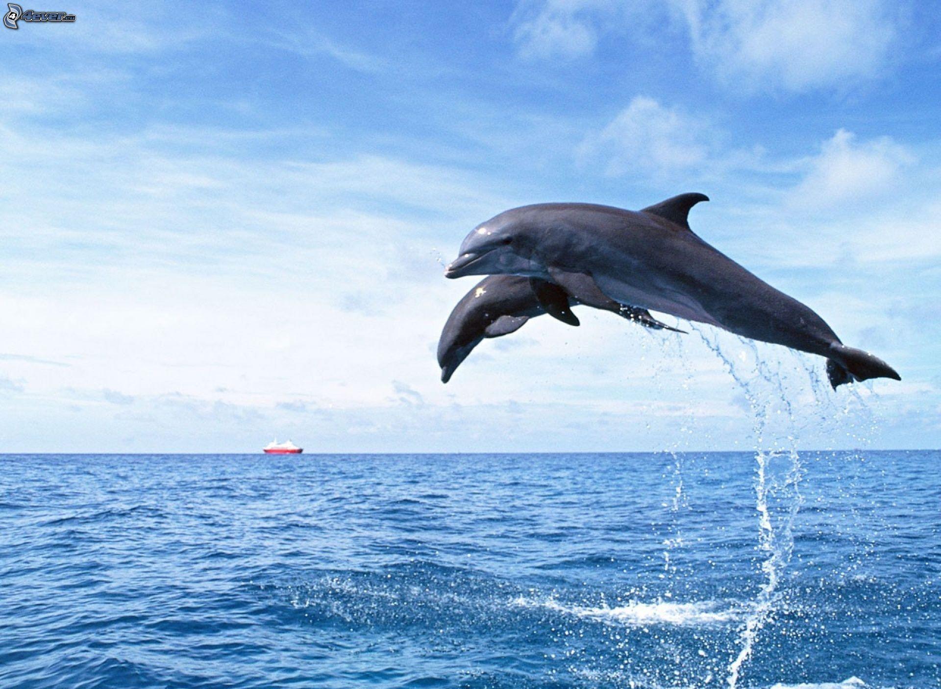 delpine