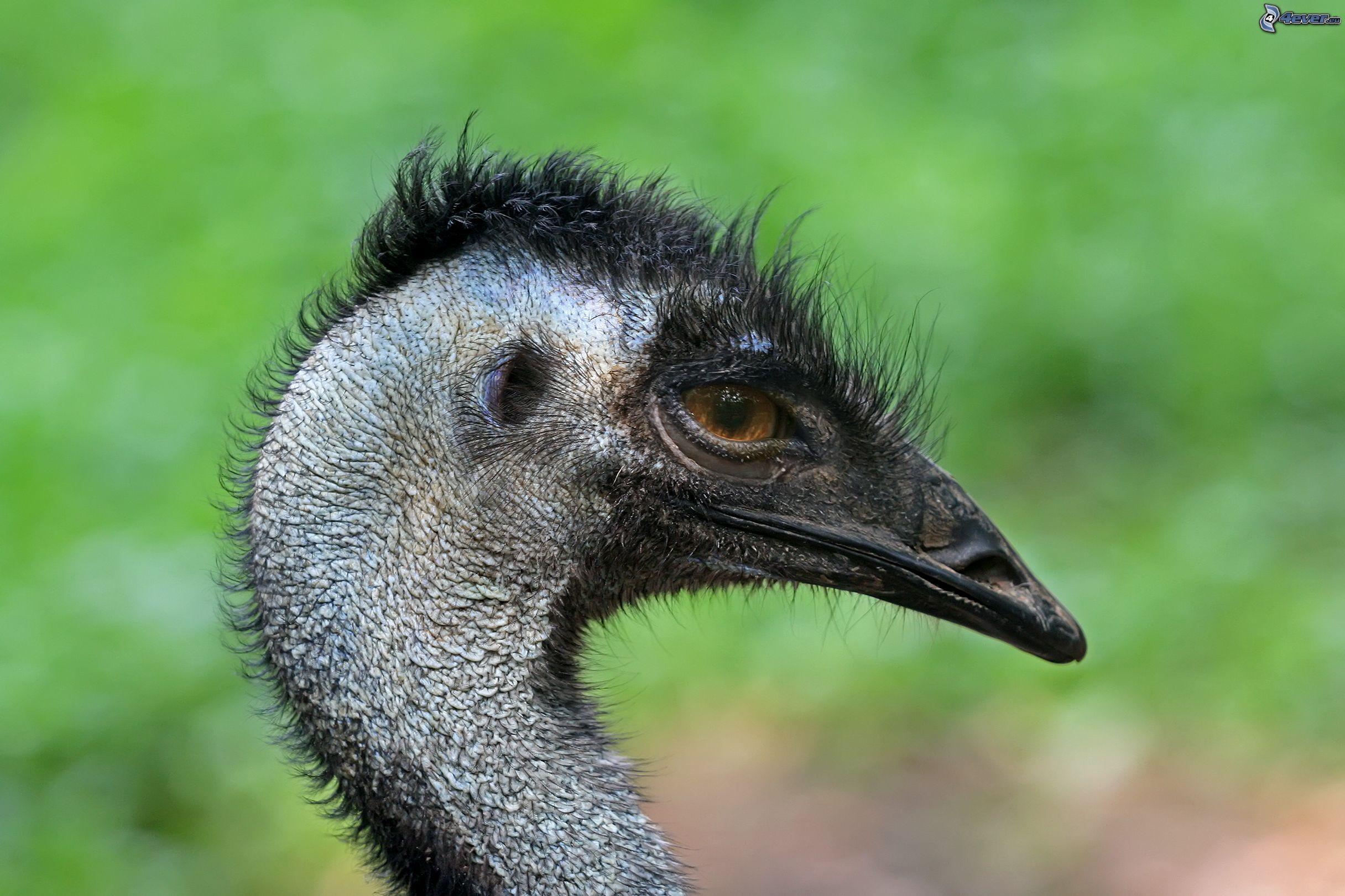 alle sexy emu