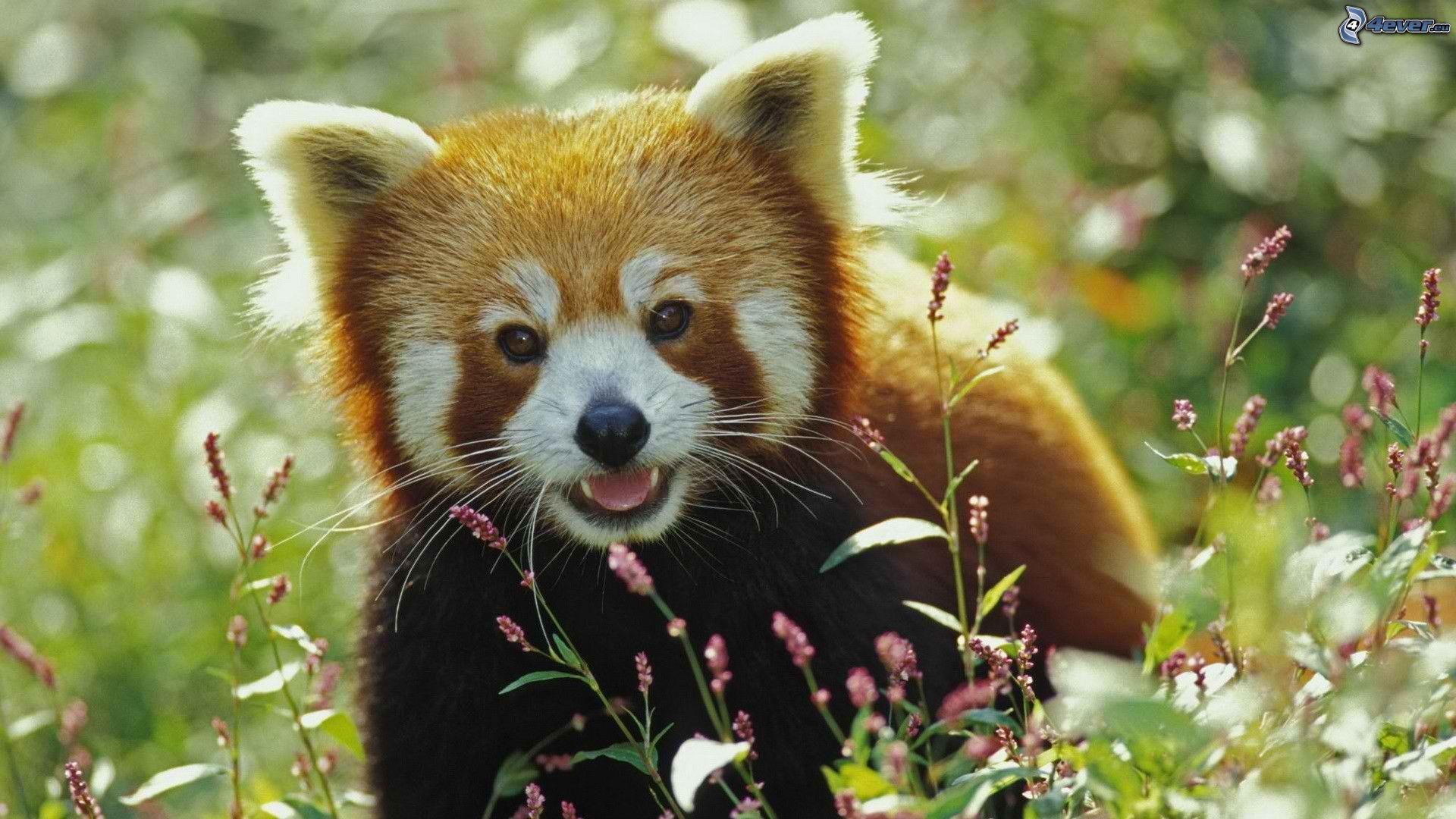 Kleiner panda gallery - Kleiner couchtisch weiay ...