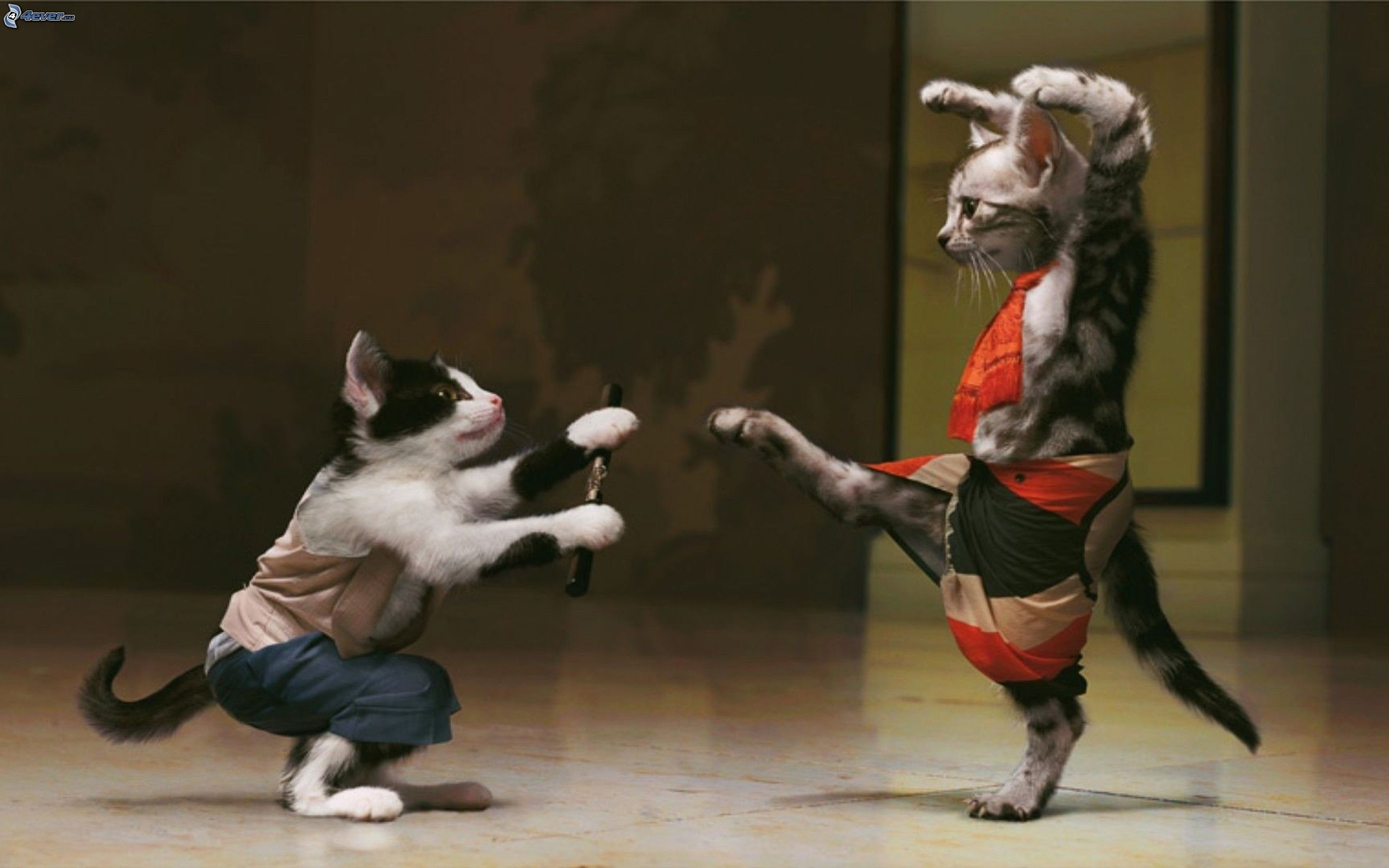 kung fu tiere