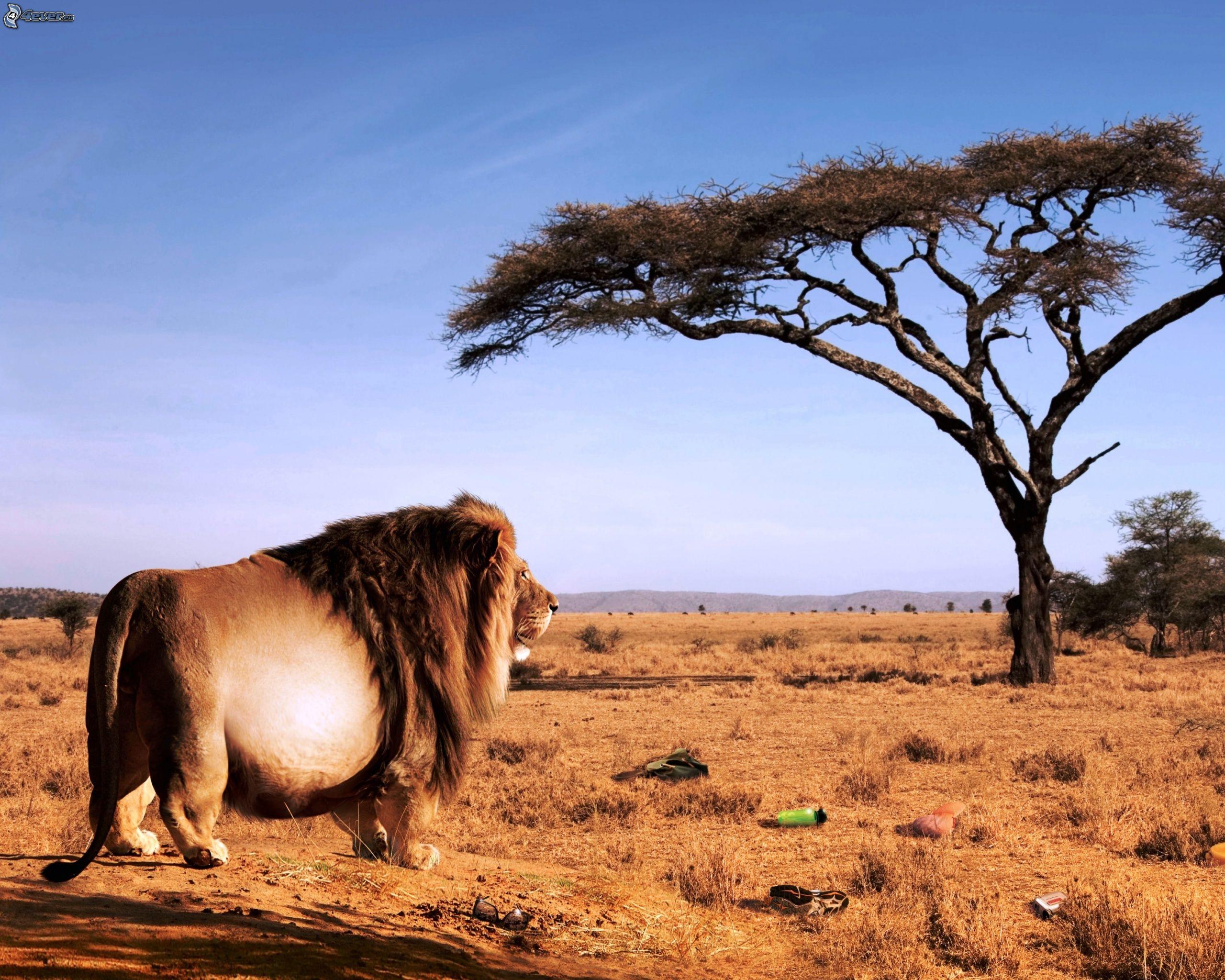 African partnervermittlung