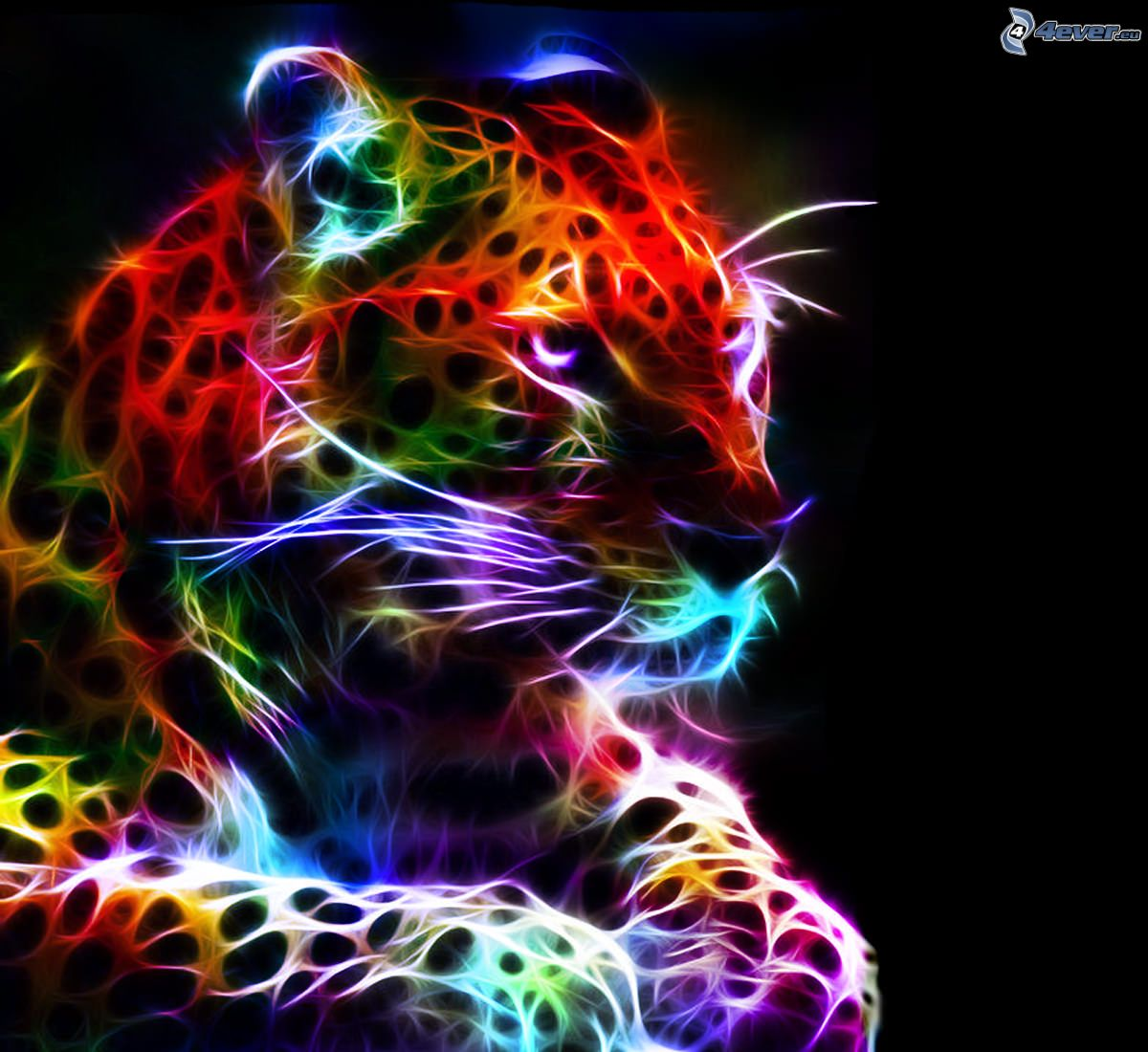 colorful leopard backgrounds artistic - photo #3