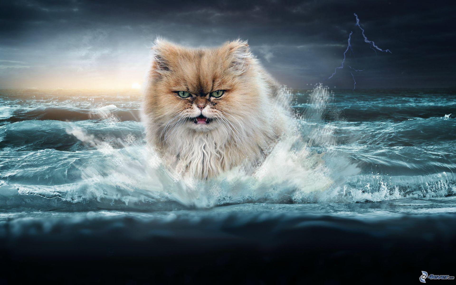 cat ohne anmeldung