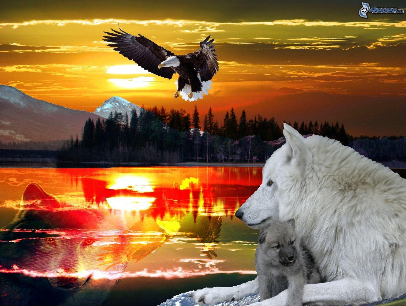 white eagle logo bing images